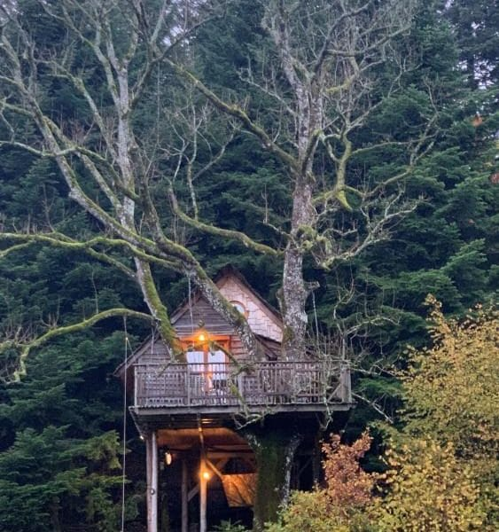 cabane dans les arbres vosges