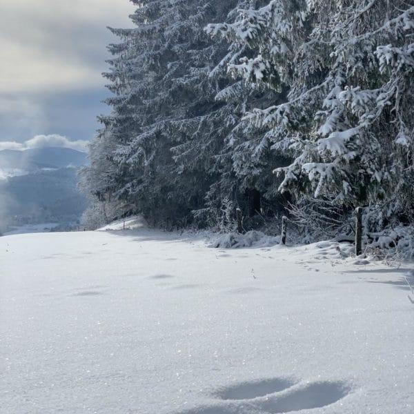 sorties raquettes neige la bresse